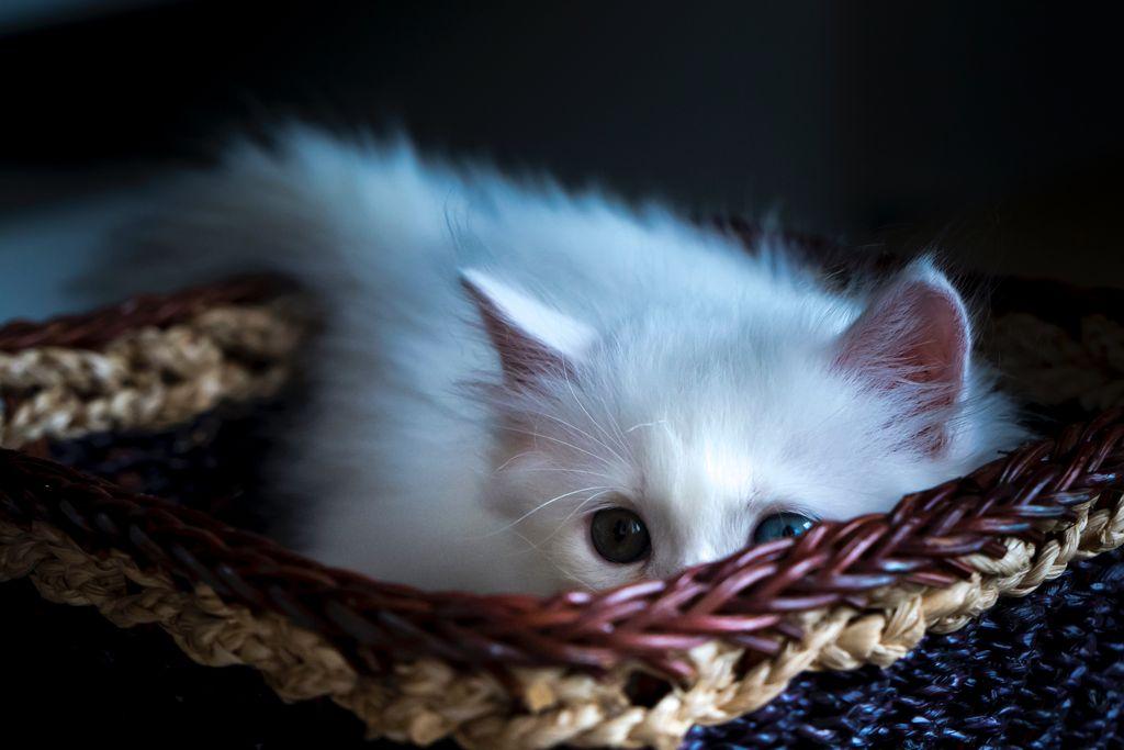 Tři kočky v košíku o výru nemluvě